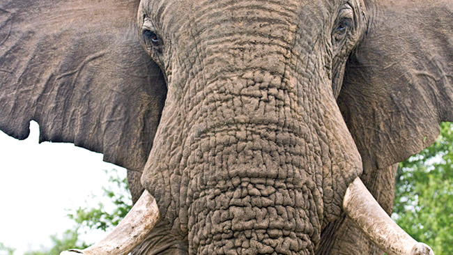 Destroying blood ivory message loud and clear | Daily News