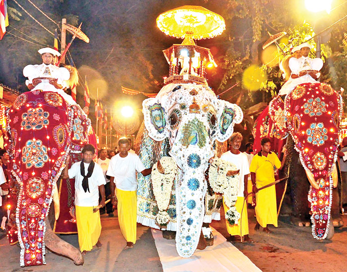 Navam Perahera: A display of collective devotion | Daily News