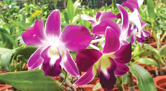 Awesome Orchids Daily News