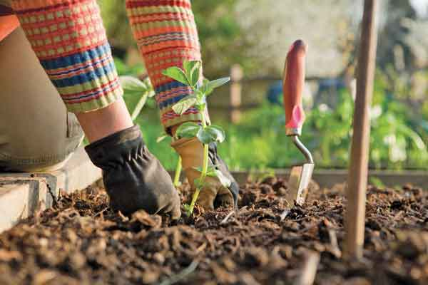 Gardening tips for beginners daily news - Gardening tips for beginners ...