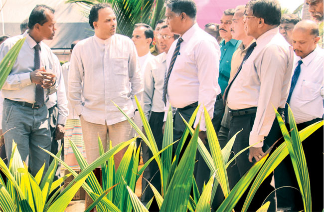 Minister visiting one of the coconut plantations
