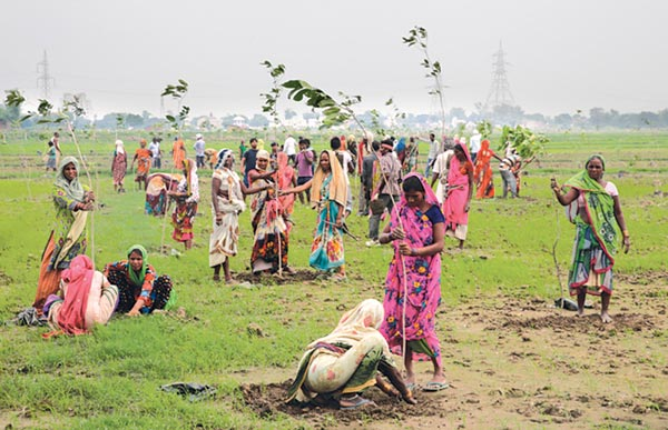 Planting challenge: Uttar Pradesh Tree Planting, 50 Million Trees in a Day