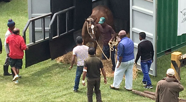 Horses being transported to Nuwara Eliya race course in State of the art containers.