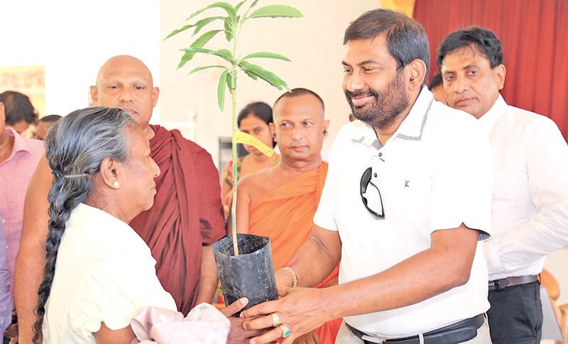 Ministry distributes mango plants in Ampara