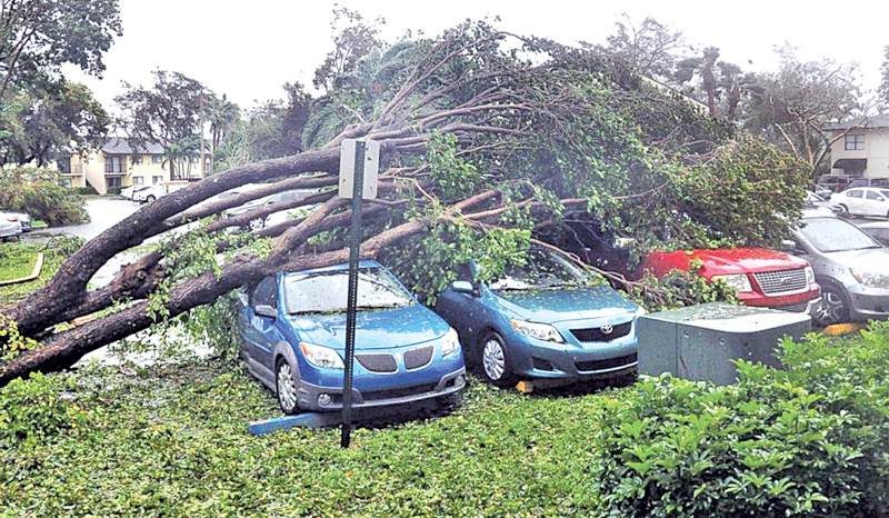 A fallen tree lies atop a row of cars on Monday Miami, in the wake of Hurricane Irma.
