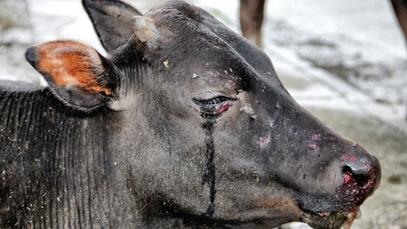 Two men fined Rs. 20,000 for animal cruelty