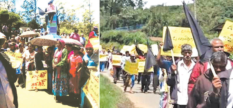 Groups of Workers protesting in front of the Ambewela Milco Factory Pictures by Chandrasiri Mahagama
