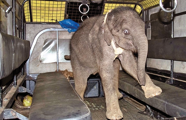 An elephant cub found in Yala National Park.
