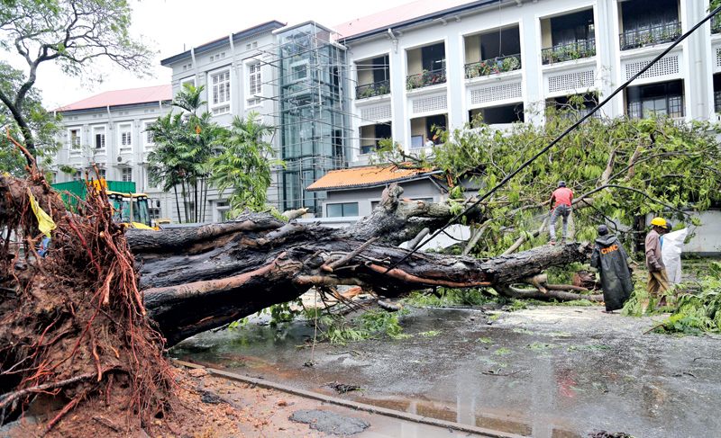 Many parts of the country experienced gusty winds and heavy rains from Wednesday night, disrupting life in many provinces. Strong winds blew across the country uprooting trees and bringing down hoardings along roads in Colombo city and the outskirts. Picture shows a tree that fell across the road near the Colombo Medical Faculty. Picture by Rukmal Gamage