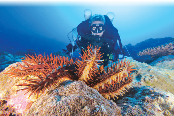 Queensland University of Technology researchers have created an autonomous underwater drone that kills the destructive crown-of-thorns starfish.- AFP