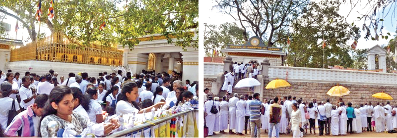 Thousands of devotees from many parts of the country flocked to the Sacred Jayasri Maha Bodhi premises yesterday to participate in religious activities to mark Medin Full Moon Poya Day. (Pictures by Amila Prabath Wanasinghe, Anuradhapura Central Corr.)