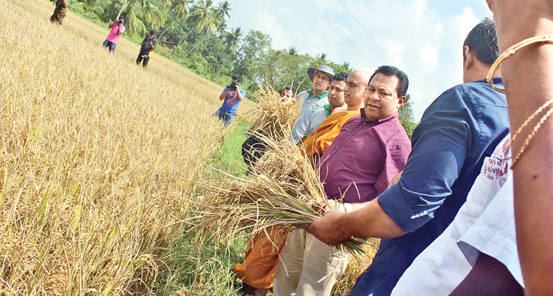 Ven. Athuraliya Rathana Thera and Minister Dissanayake inaugurating the paddy harvesting. Picture by Ragama Group Corr.
