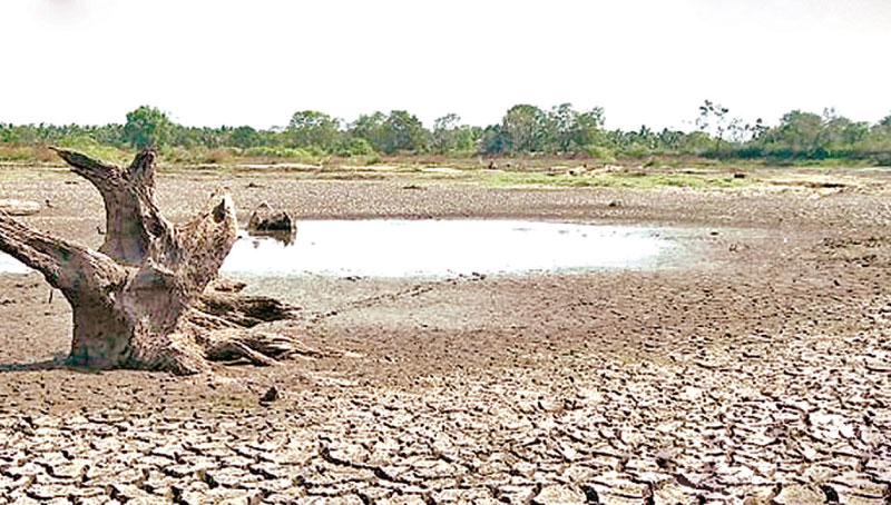 A tank run dry in Anuradhapura. Picture by Nimal Wijesinghe, Anuradhapura Additional District Group Corr.