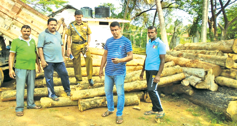 Police with the haul of teak. Picture by A. A. L. DIAS, Matale District Group Corr.