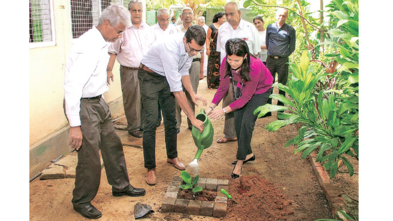 A Jak sapling being planted