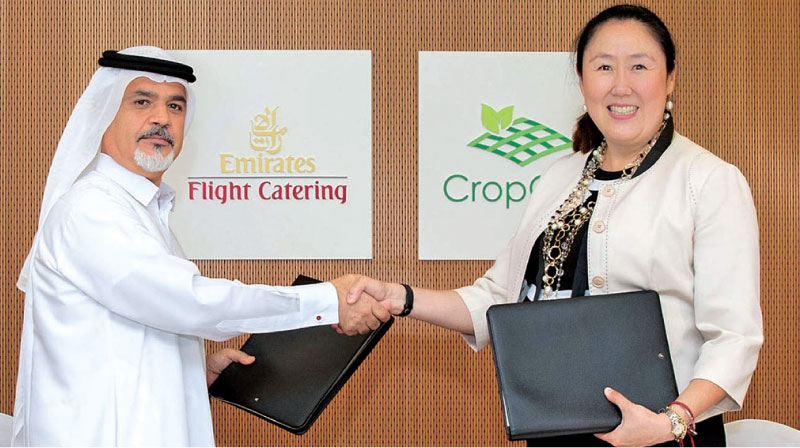 Emirates flight catering builds world's largest vertical farming