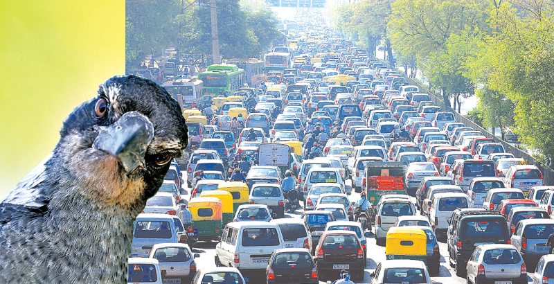 Traffic noise makes birds age faster | Daily News