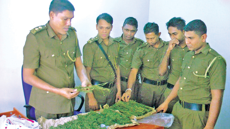 Excise Officers with the cannabis. Picture by Rahul Samantha Hettiarachchi.