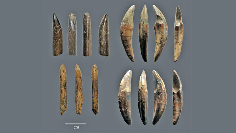 This is an example of tools manufactured from monkey bones and teeth recovered from the Late Pleistocene layers of Fa Hien Cave (Pahiyangala Cave) in Sri Lanka. Credit: N. Amano.