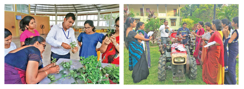 Teachers were trained by a qualified and experienced team from Hayleys Agriculture.