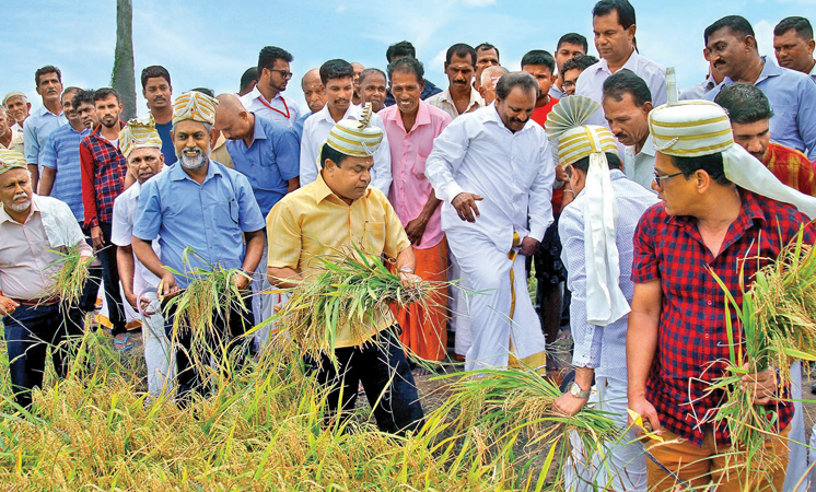 Minister P. Harrison inaugurating Yala season paddy harvesting in the East.