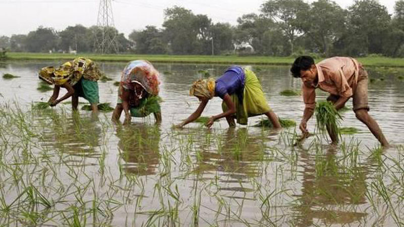 For relieving farmers from uncertain prospects, the States will be forced to implement e-NAM mechanism for better operations under the APMC Act.  AP