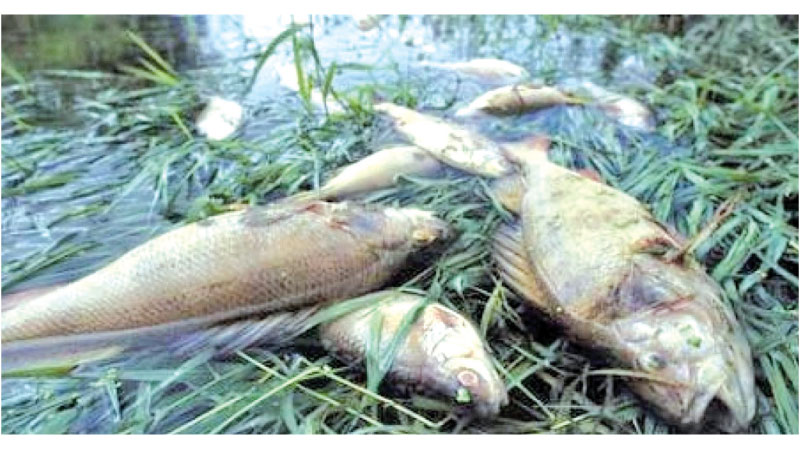 Damage to aquatic wildlife in river Thames due to CSOs