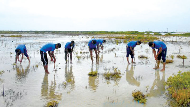 Navy personnel engaged in planting mangrove saplings.