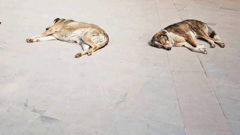 Stray Dogs resting - Istanbul, Turkey, Europe