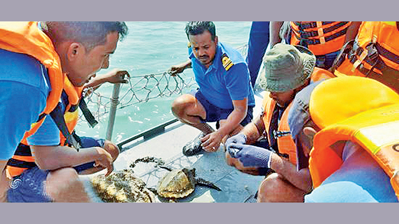The rescued-Olive Ridley turtle has been released to the Ocean.