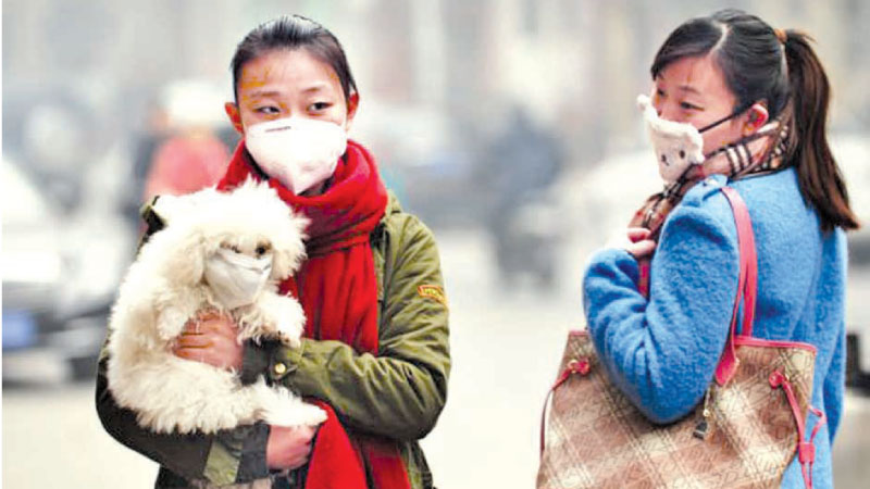 A girl puts a mask on her dog in Shijiazhuang in China's Hebei Province.