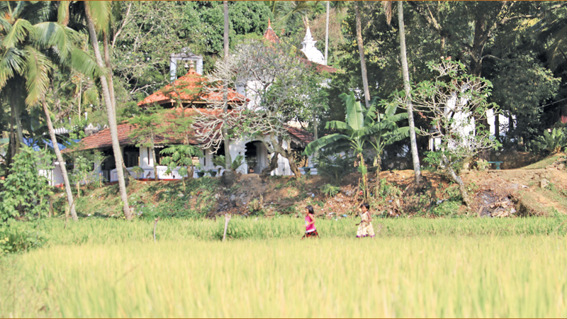 The temple borders a large extent of paddy fields.