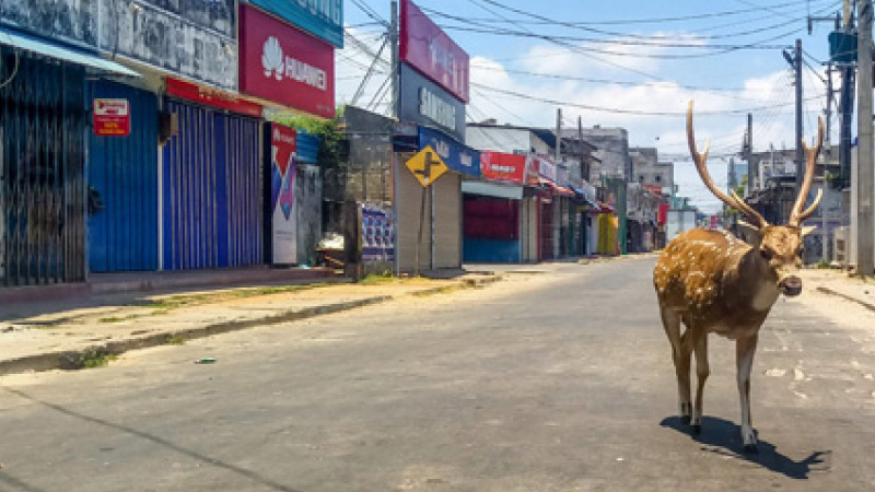 A deer roams in Trincomalee's deserted streets (AFP)