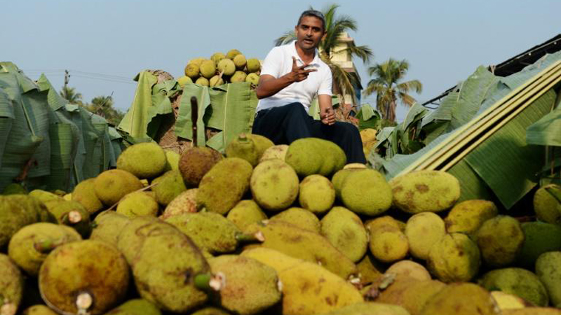 India is the world's biggest producer of jackfruit.