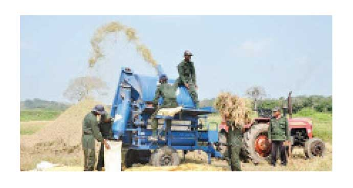 Army personnel collecting the paddy harvest under the 'Thuru Mithuru-Nawa Ratak' crop-cultivation and afforestation project.