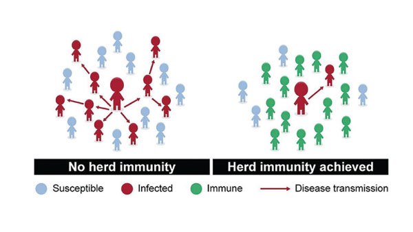 Graphic explaining herd immunity, where immunity to a disease in a population — whether through natural infection or preferably, by widespread vaccination — reaches a high-enough percentage to stem the spread of an outbreak.