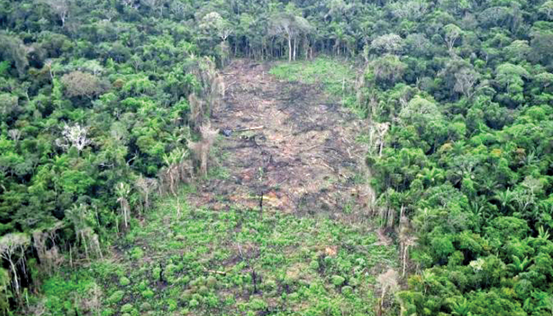 In Colombia, deforestation of the Amazon has accelerated by 80 percent during COVID lockdown.