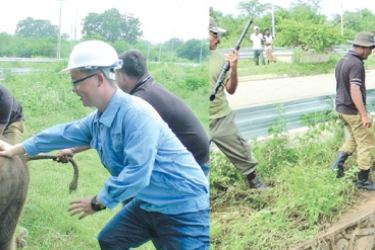 Wildlife officials together with a Chinese national rescued the baby elephant. Pictures by Rahul Samantha