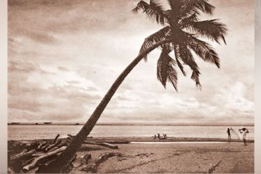 Coconut palm tree on a beach near Negombo.