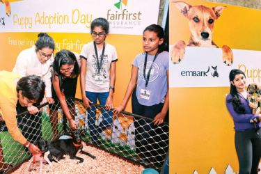 Puppy adoption day at the Fairfirst Corporate office together with Embark