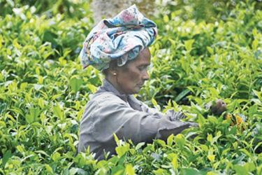 Tea farmer in Sri Lanka