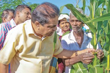 Agriculture Minister P. Harrison inspects damaged crops in Nachchaduwa on Sunday.