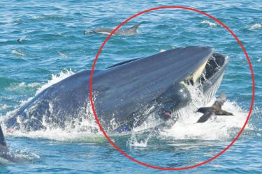 Dive tour operator Rainer Schimpf (Circled) was briefly swallowed by the whale.