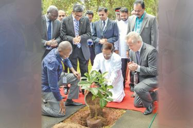 President Maithripala Sirisena planting a jak sapling at the World Agroforestry Centre in Nairobi yesterday.  Picture by Sudath Silva.