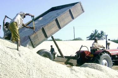 Salt harvesting in Hambantota.