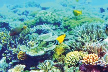 Coral is very sensitive and needs sunlight to feed. Mud from various other locations spill into the ocean and end up blocking sunlight