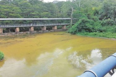 The contaminated Kumbukkan Oya. Picture by G.I.R. Garusinghe, Wellawaya Special Corr.