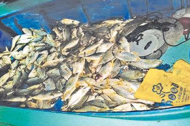 The seized haul of fish.