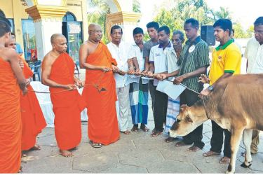 Handing over the rescued cattle to needy families