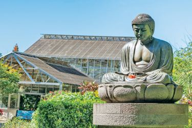 The Buddha statue at the Foster Botanical Gardens.